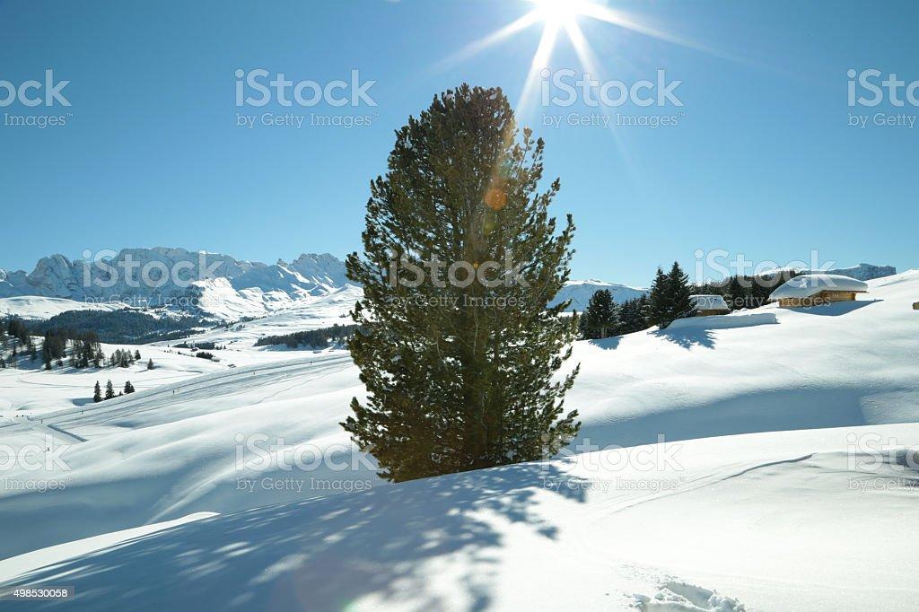 Alpe di Siusi, Trentino Alto Adige, Italy stock photo