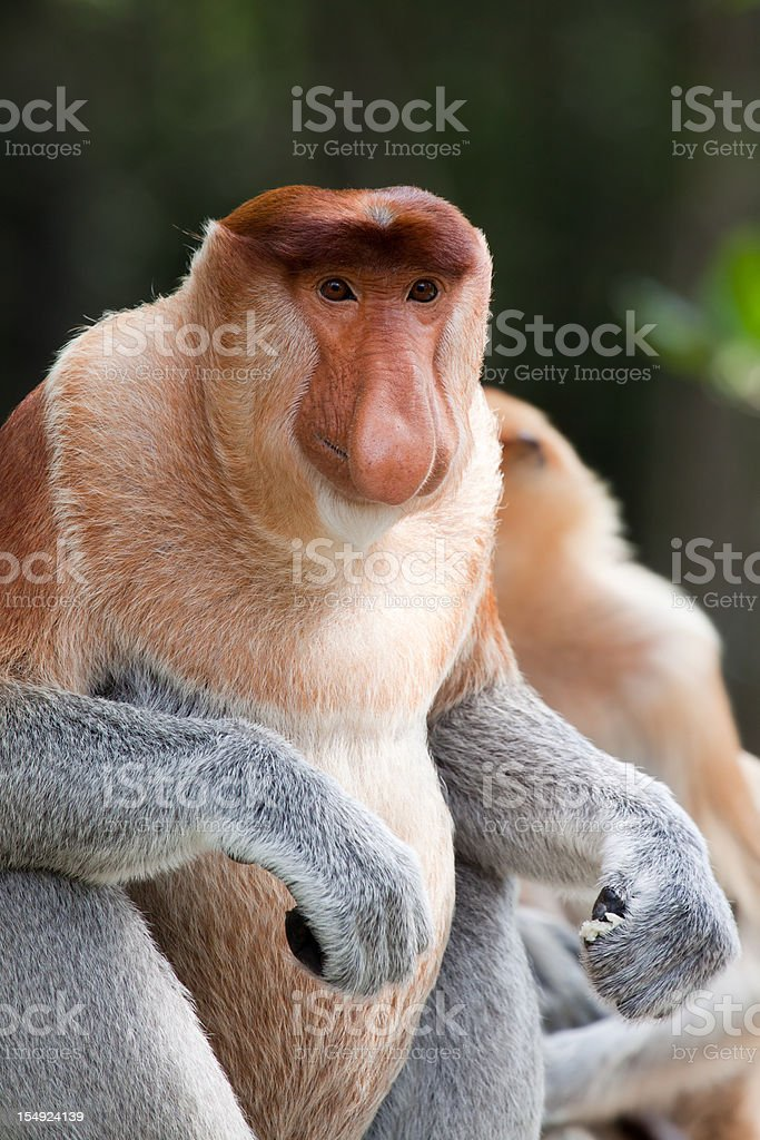 Alpha male portrait stock photo