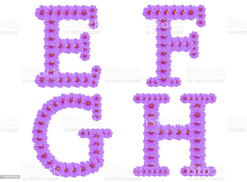 Alphabet E F G H, Cosmos flower isolated on white stock photo