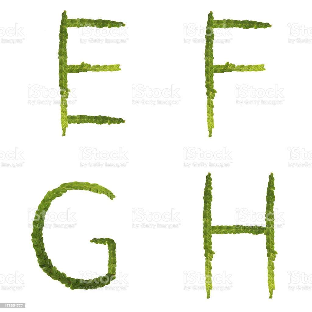 alphabet from green leaf tree royalty-free stock photo