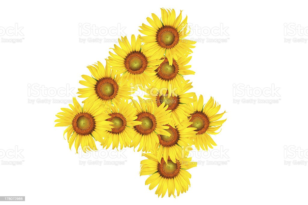 alphabet from sunflower royalty-free stock photo