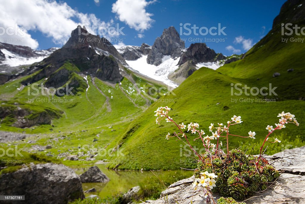 alpin lake fallenbach in tirol - austria stock photo