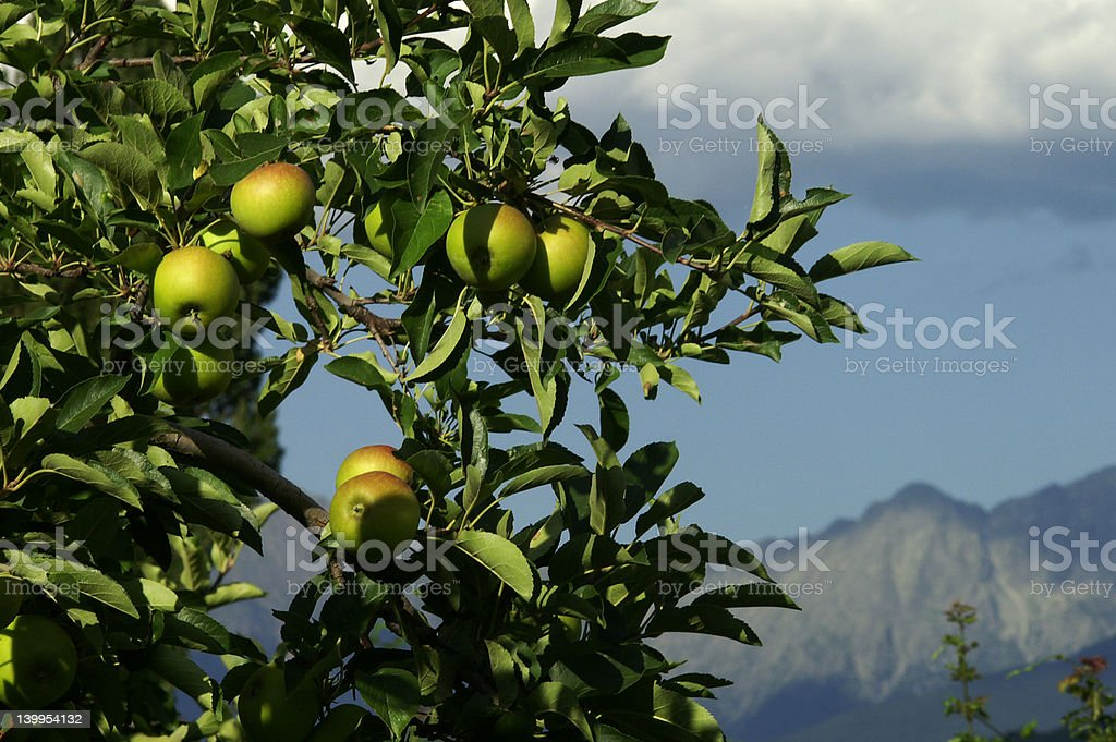 Alpine apples royalty-free stock photo