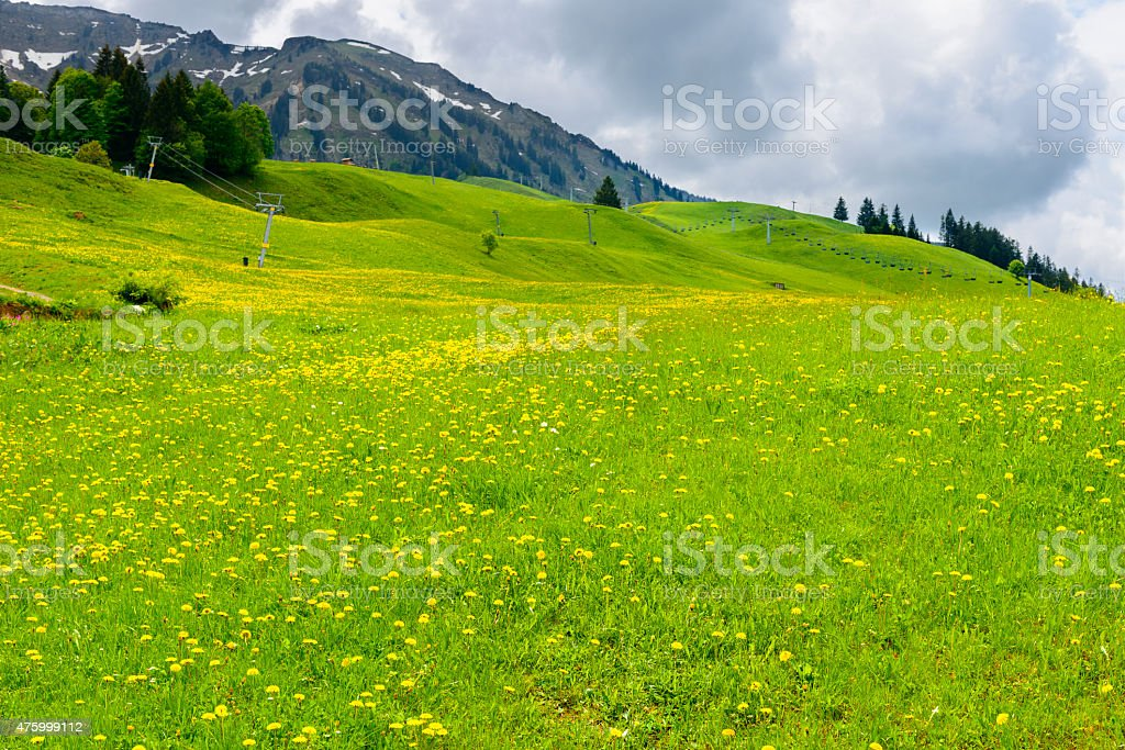 Alpine beautiful spring meadow landscape blossom hilly stock photo