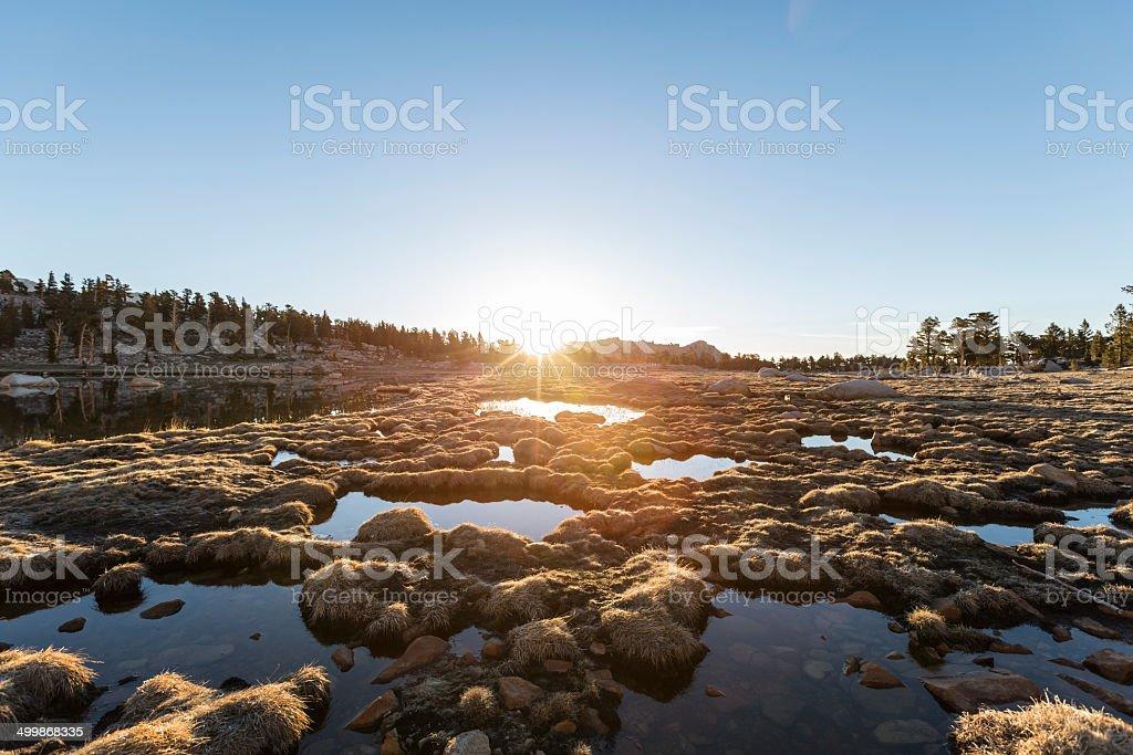 Alpine Bog Sunrise stock photo