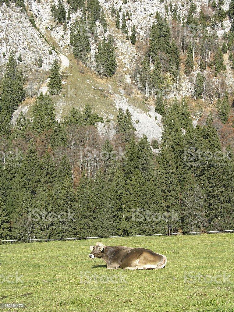 alpine cow1 stock photo