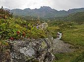Alpine flora and mountain range