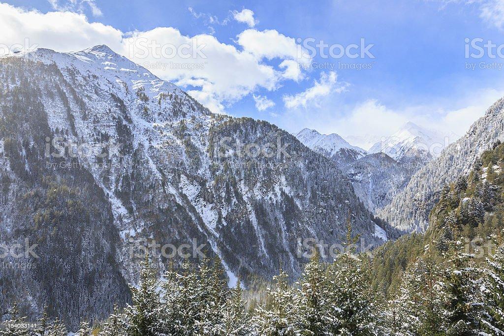 Alpine forest landscape stock photo