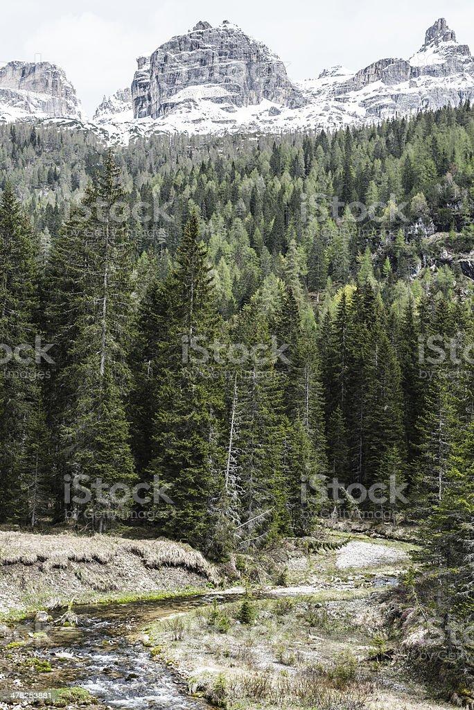 Alpine forest snowy peaks stock photo