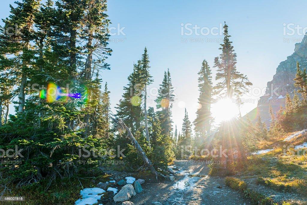 Alpine Forest Sunset Glacier National Park Montana Nature Trail USA stock photo