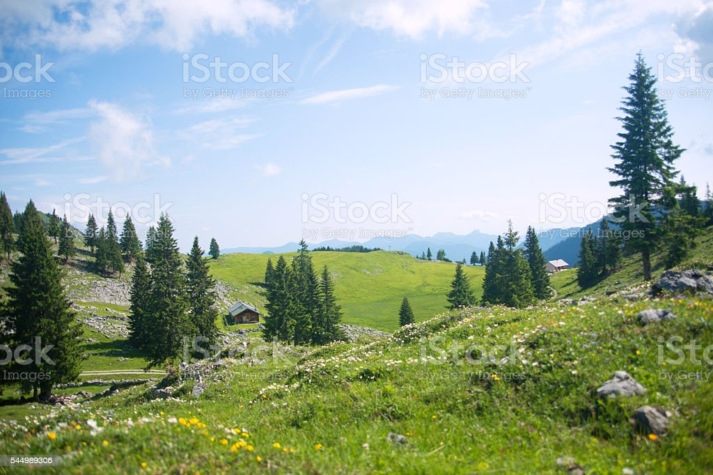 alpine fresh meadow in sunny sky stock photo