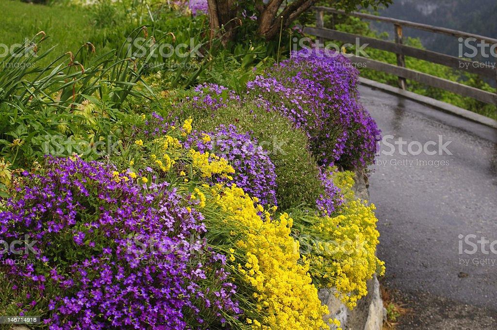 Alpine Garden stock photo