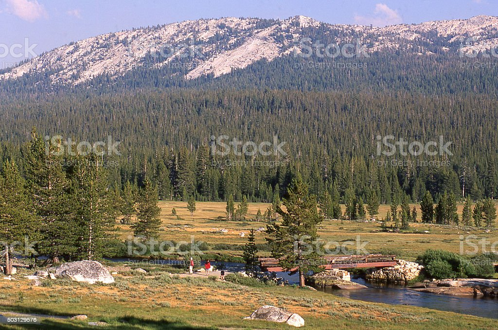 Alpine grasslands and forests Tuolumne Meadows Yosemite National Park California stock photo