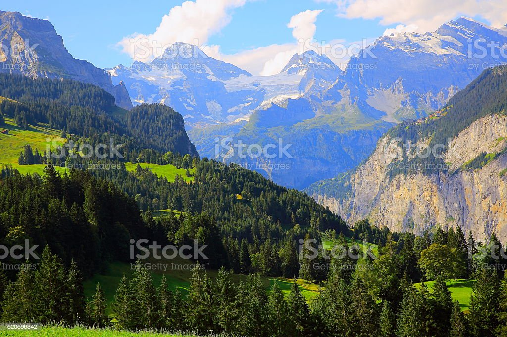 Alpine idyllic Landscape: Pine tree woodland, Lauterbrunnen valley, Swiss Alps stock photo