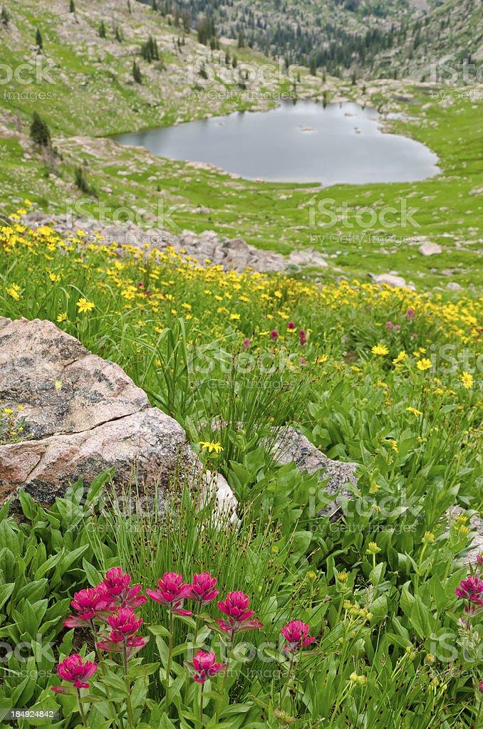 Alpine Lake and Mountain Wildflowers stock photo