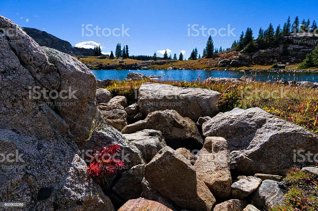 Alpine Lake with Red Flowers stock photo