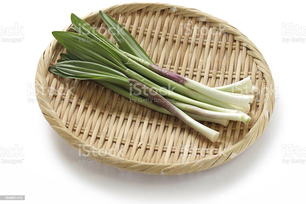 alpine leek, victory onion royalty-free stock photo