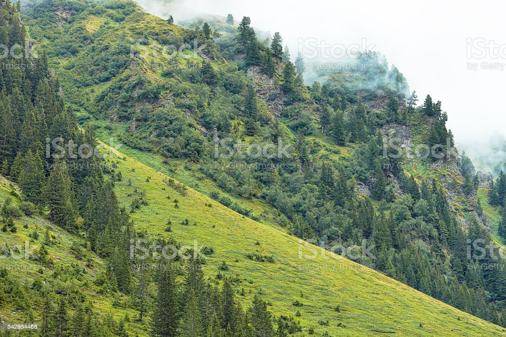 Alpine meadow and forest with Fog in European Alps stock photo