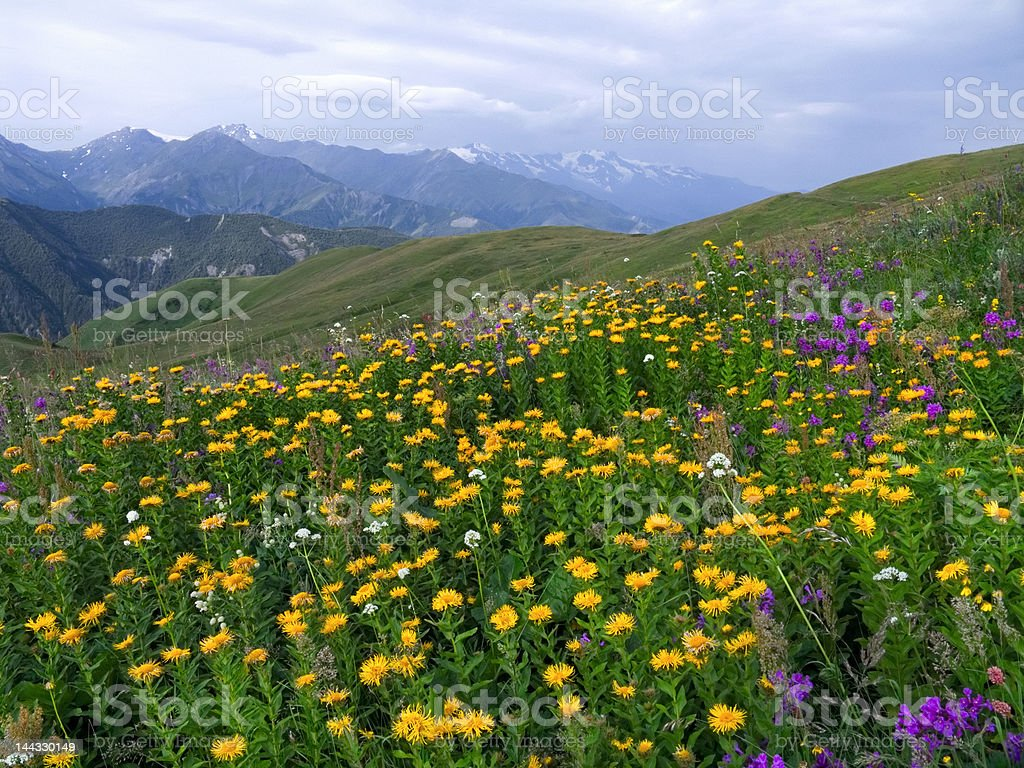 Alpine meadow and wildflowers royalty-free stock photo