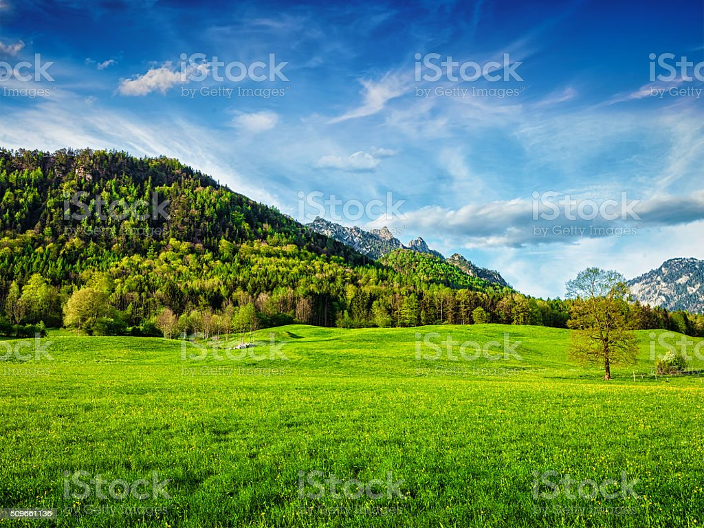 Alpine meadow in Bavaria,  Germany stock photo