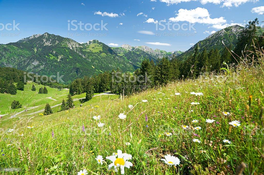 alpine meadow in germany stock photo