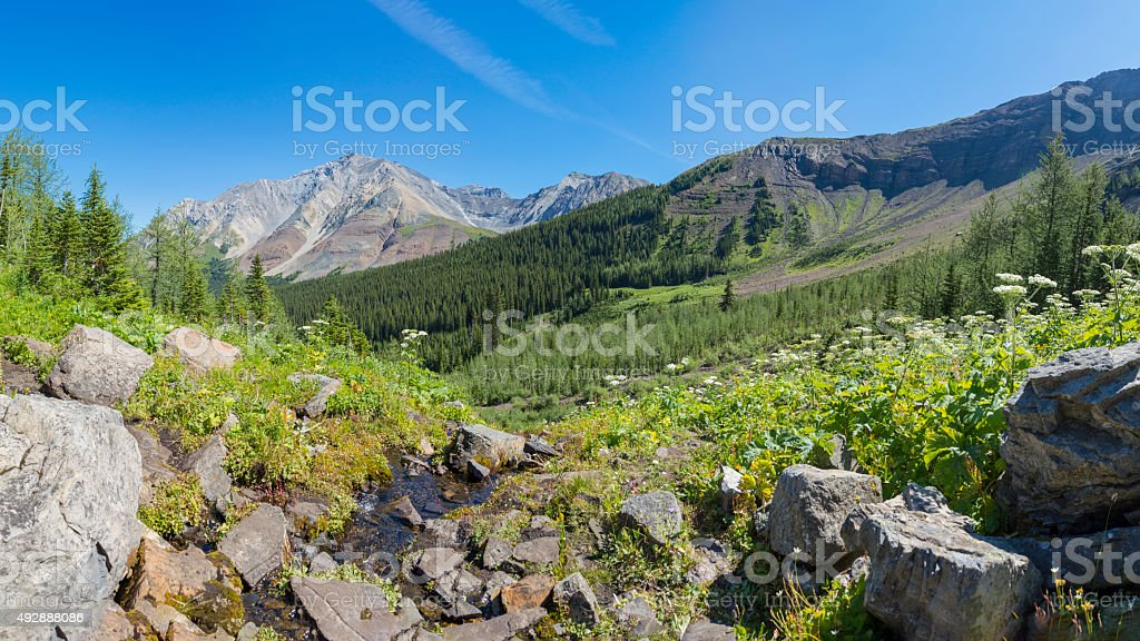 Alpine Meadow in the Rocky Mountains Alberta Canada stock photo