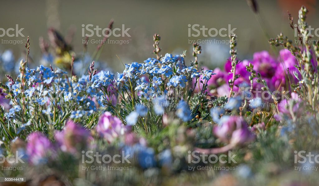 Alpine meadow in the summe stock photo
