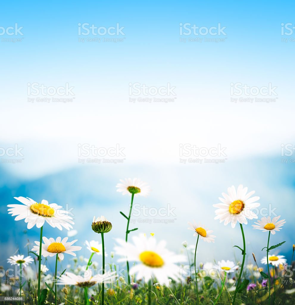 Alpine Meadow On a Beautiful Day stock photo