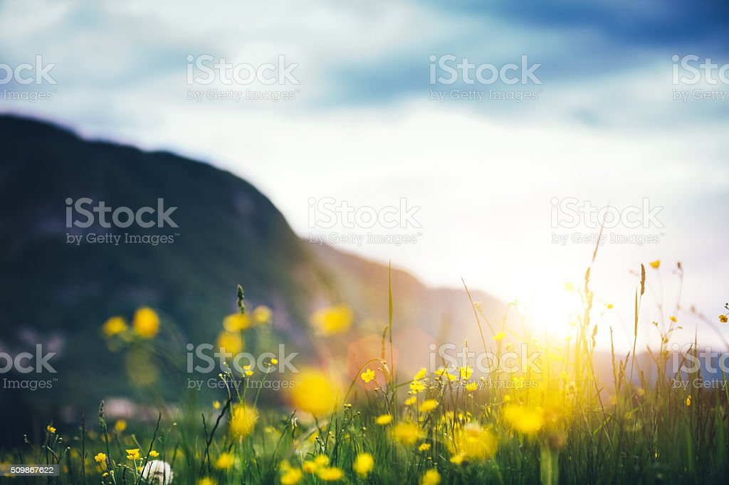Alpine Meadow stock photo