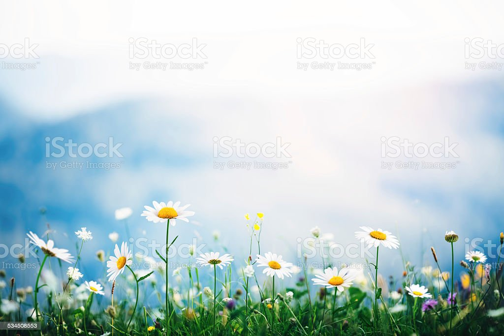 Alpine Meadow stock photo