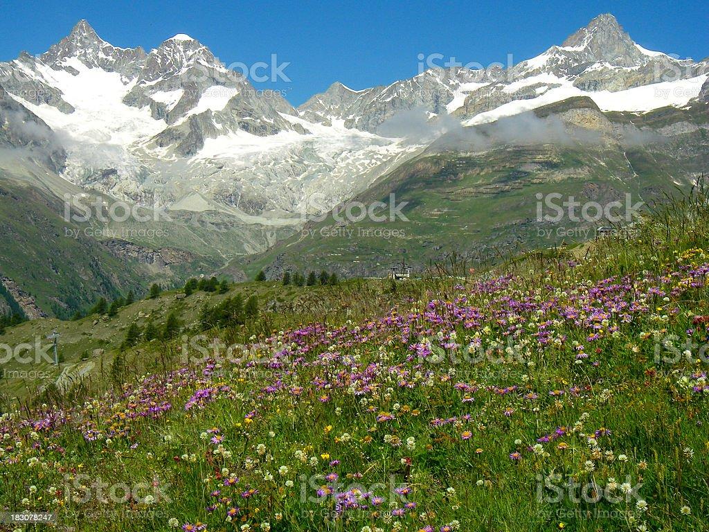Alpine Meadow Wildflowers And Glacial Peaks Swiss Alps Zermatt Switzerland stock photo