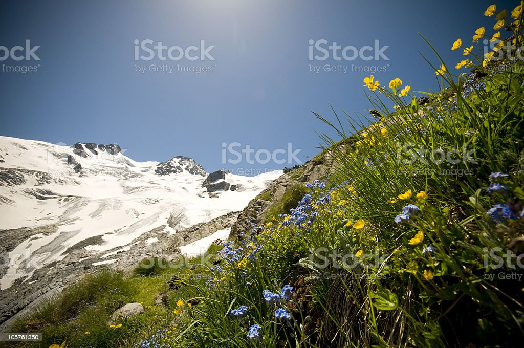 Alpine meadow with flowers Rosegg-glacier royalty-free stock photo