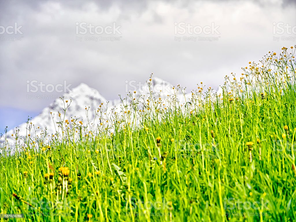 Alpine meadow with mountains in the background stock photo