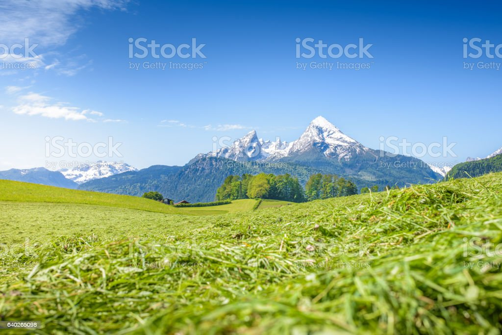 Alpine meadow with snowy Watzmann stock photo