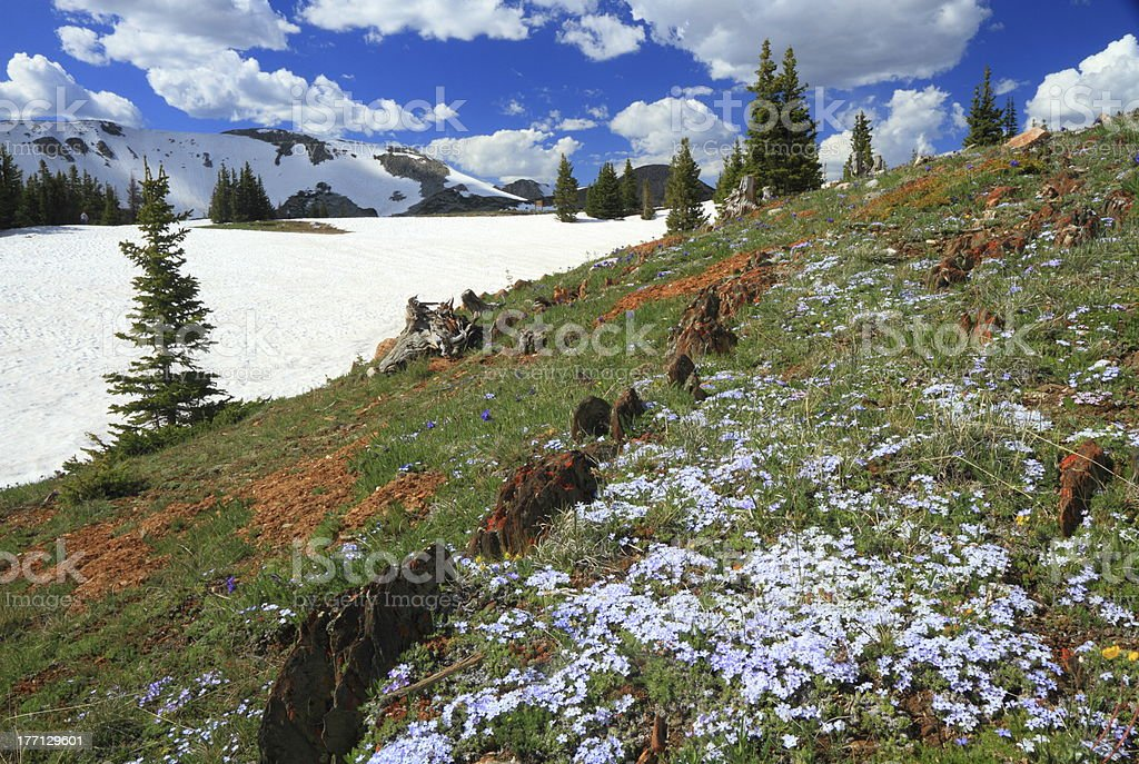 Alpine meadows in Wyoming royalty-free stock photo