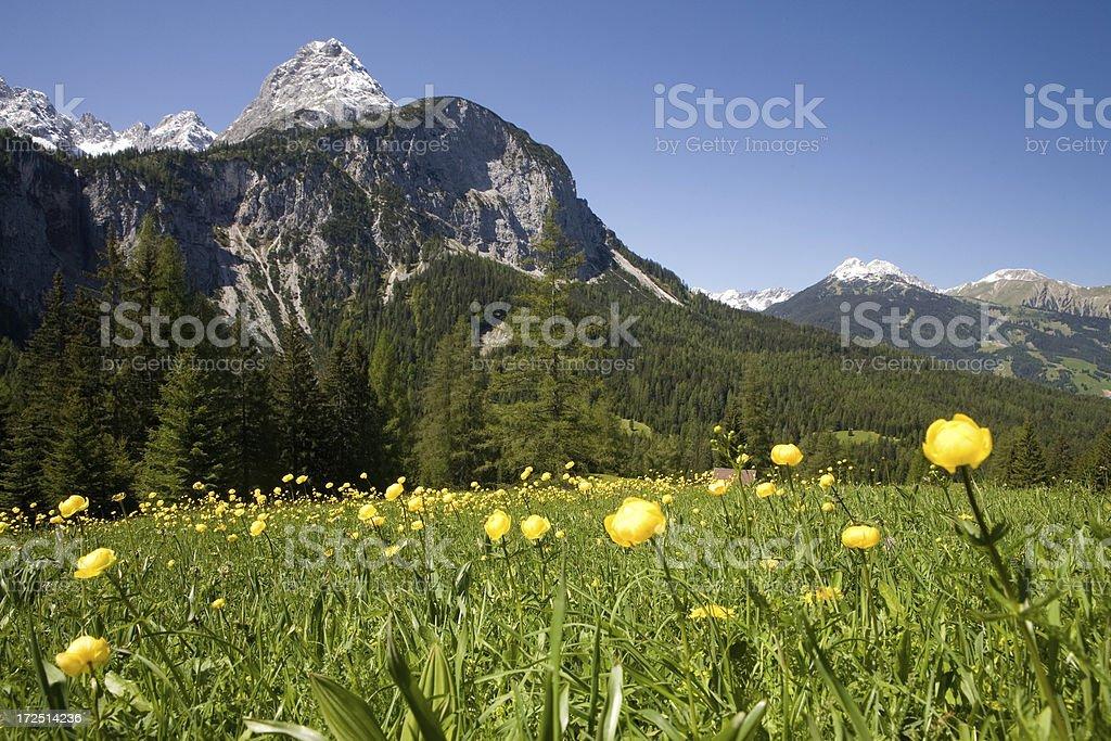 alpine meadows royalty-free stock photo