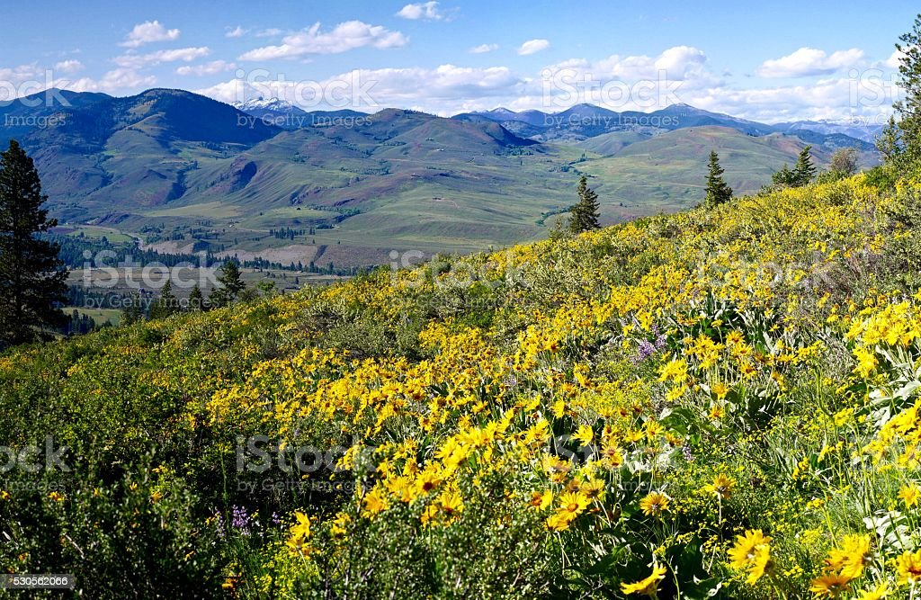 Alpine Meadows, Wild Flowers, Hills and Snow Capped Mountains. stock photo