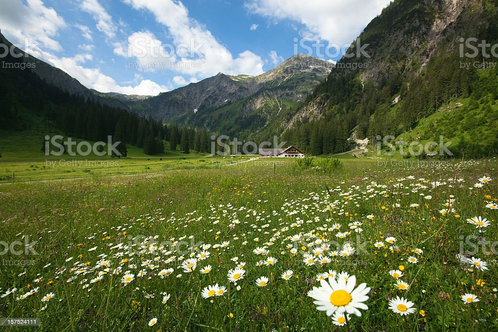 alpine meadows with maguritte royalty-free stock photo