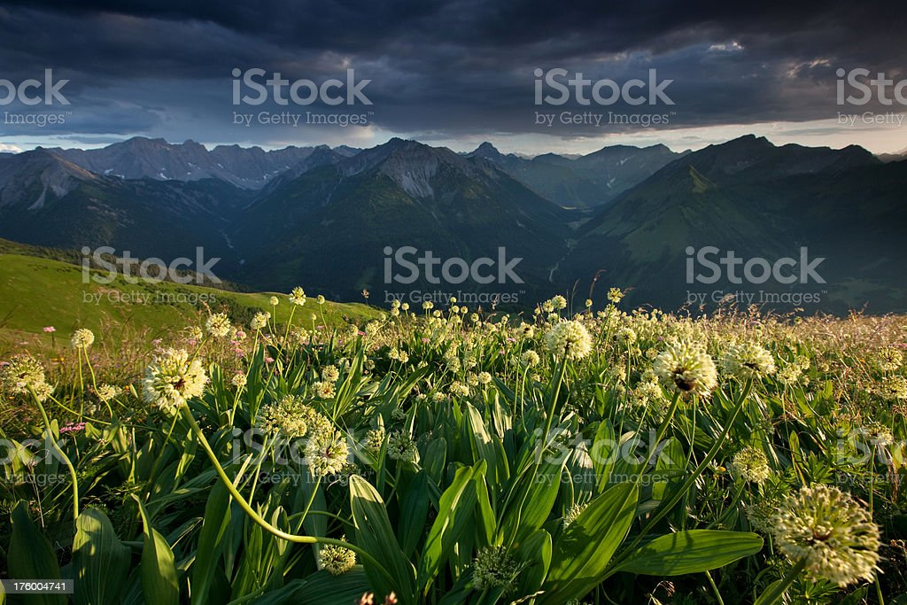 alpine meadows with ramson royalty-free stock photo