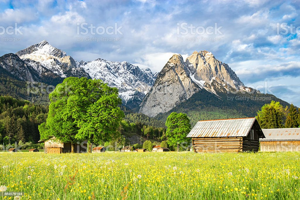 Alpine morning rural landscape with spring flowering valley mead stock photo