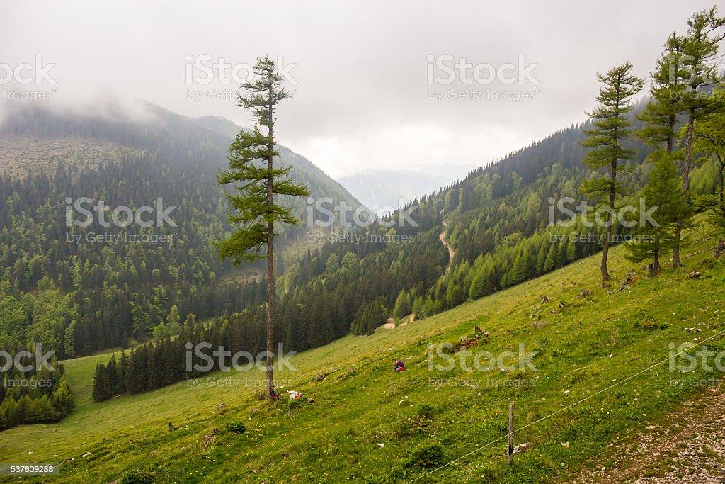 Alpine mountain panorama near Schneeberg, in Lower Austria stock photo