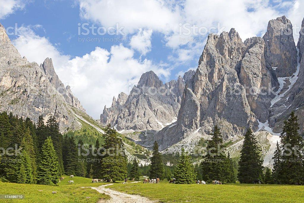 Alpine pasture in the Dolomites stock photo