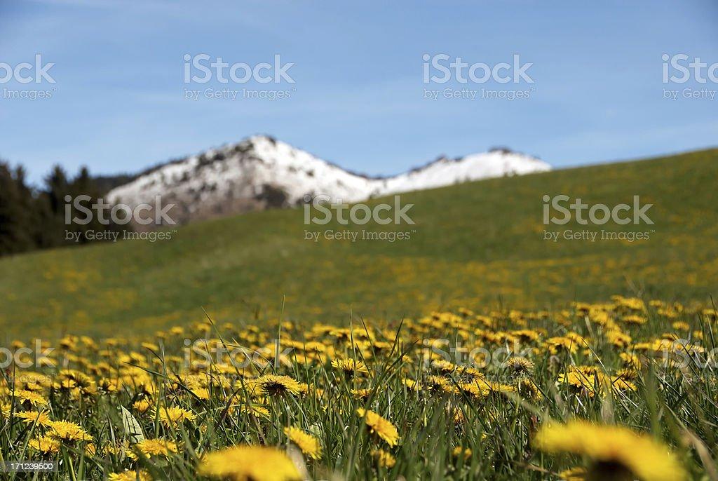 Alpine pasture meadow stock photo