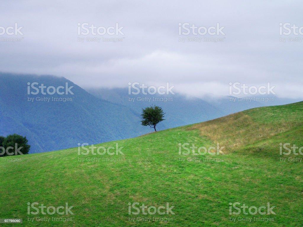alpine pasture royalty-free stock photo