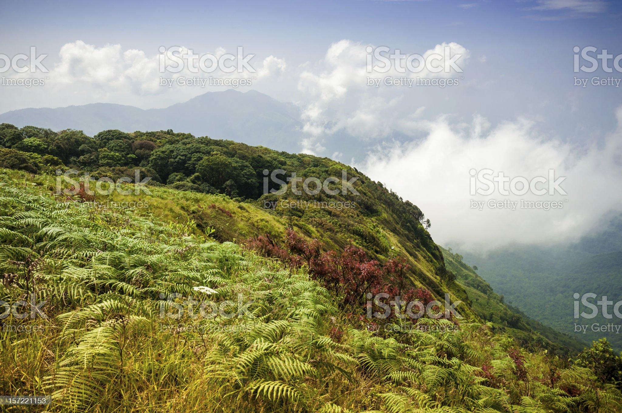 Alpine savanna grassland royalty-free stock photo
