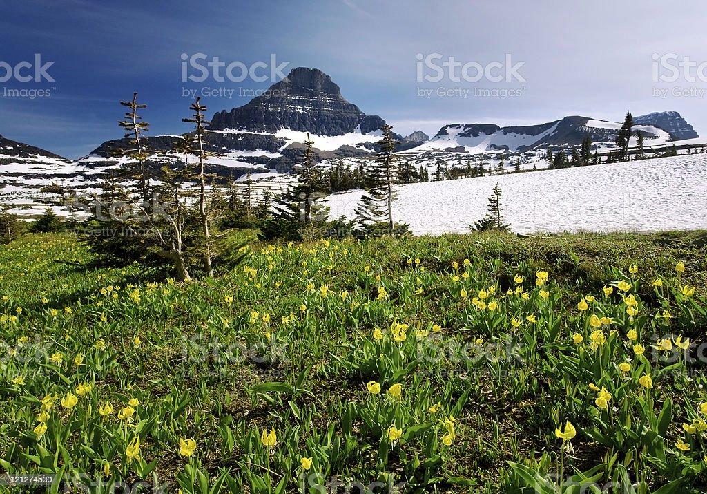 Alpine Spring Wildflowers royalty-free stock photo