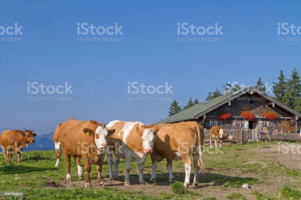 Alpine Summer in the Bavarian Alps stock photo