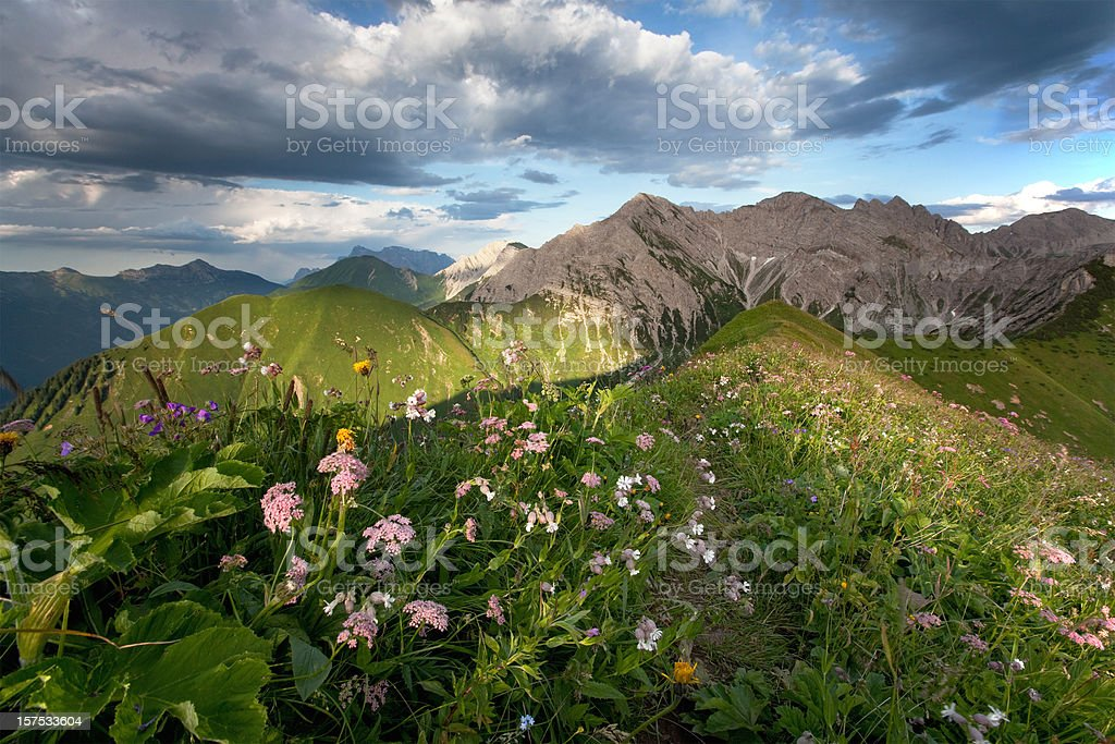 alpine summer meadows royalty-free stock photo