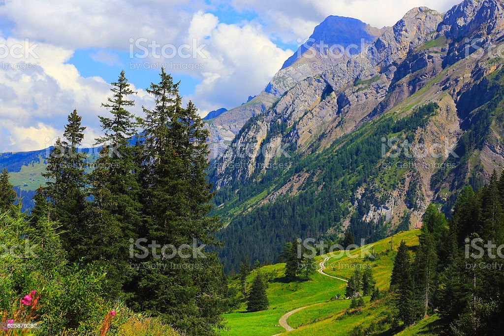 Alpine trail, country road, Engadine pine tree woodland: Swiss Alps stock photo