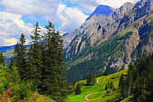 Alpine trail, country road, Engadine pine tree woodland: Swiss Alps